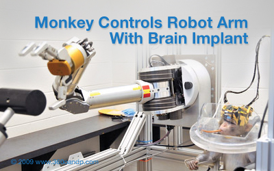 Monkey Controls Robot Arm With Brain Implant
